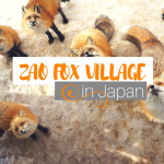 Zao Fox Village: Japan's Cutest Tourist Attraction
