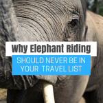Why Elephant Riding Should Never Be in Your Travel List