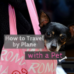 How to Travel by Plane with a Pet