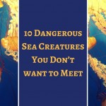10 Dangerous Sea Creatures You Don't want to Meet