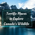 Terrific Places to Explore Canada's Wildlife