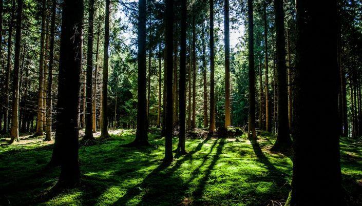 Bruzale Area, Lithuania