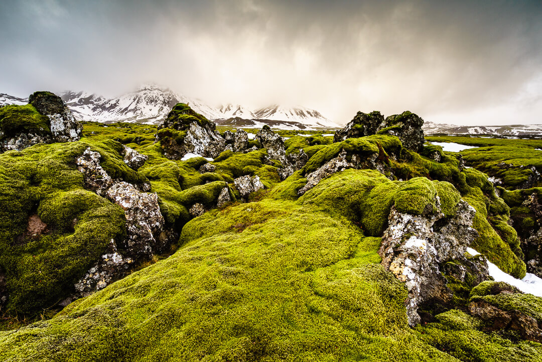 magical Iceland fields