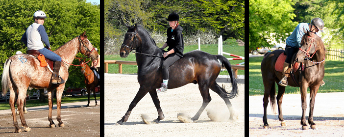 horse riding travel insurance