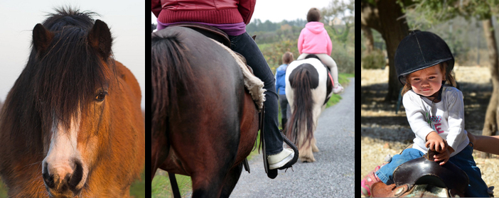 pony trekking travel insurance