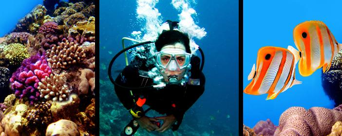 scuba diving travel insurance