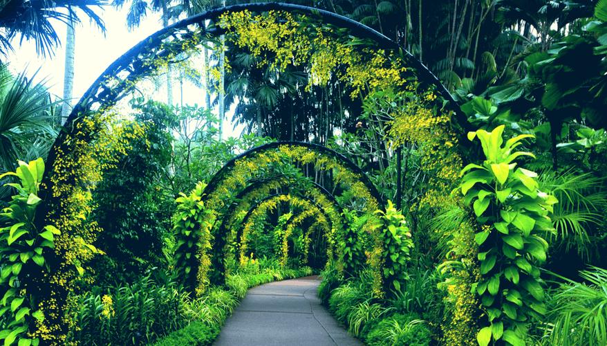 Singapore's Botanical Gardens